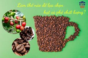 lua chon hat ca phe chat luong